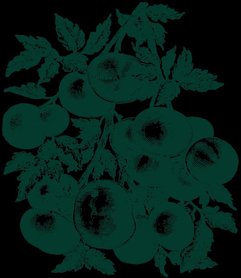 Vegetable Illustration of potatoes
