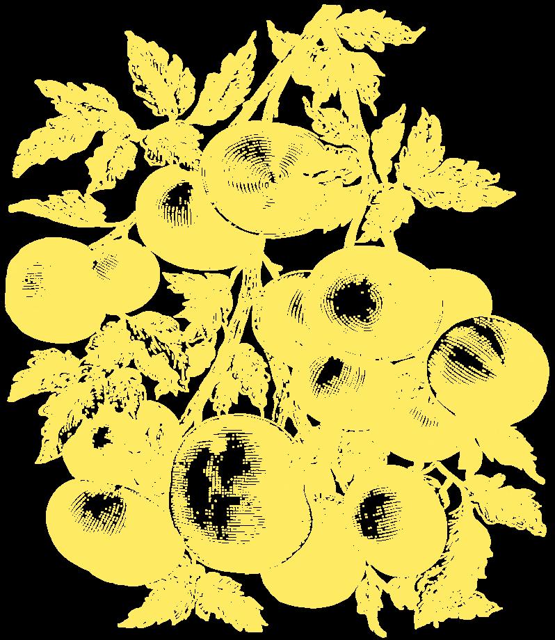 Vegetable Illustration