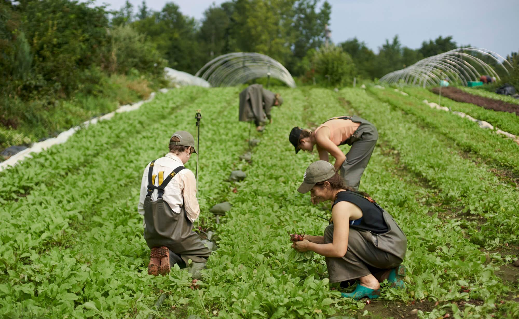 Gardeners inspecting crops