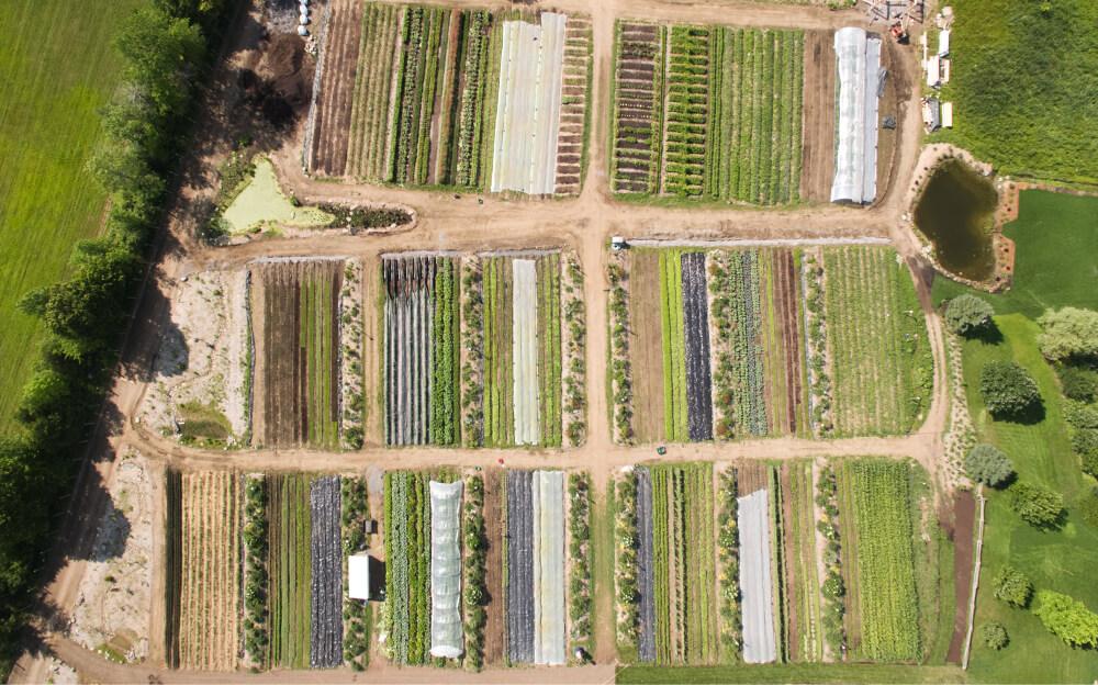 Distant bird's eye view of an organized farm