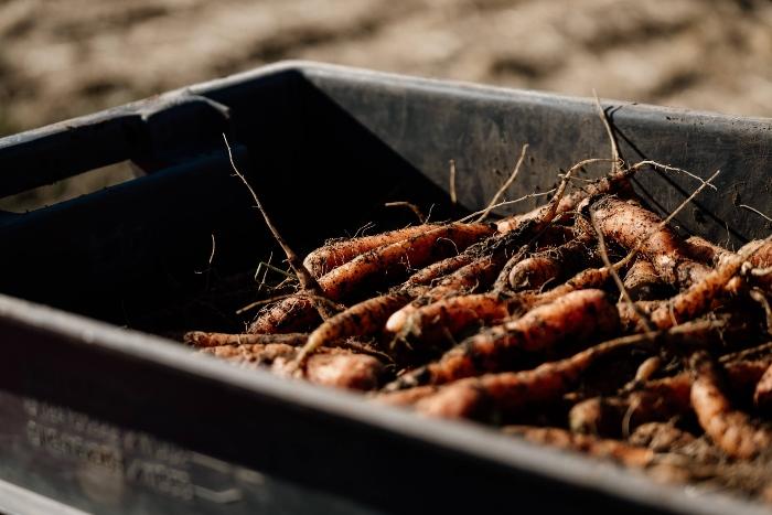Quels sont les avantages des légumes de conservation pour vos membres? /Crédit : Jessica Théroux