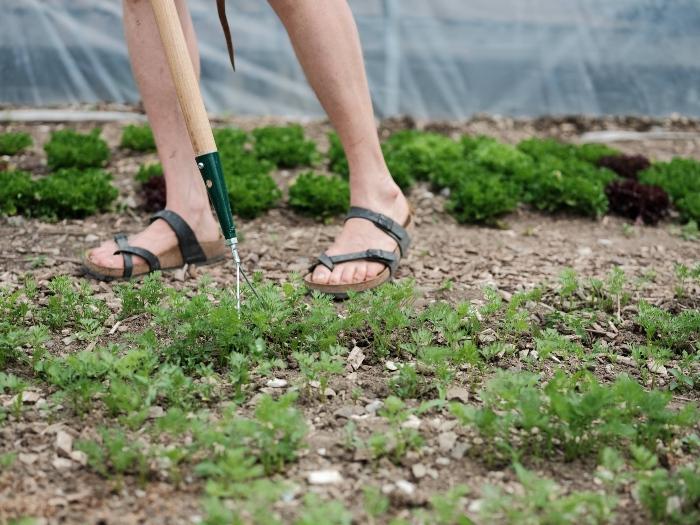 La gestion des mauvaises herbes doit être une priorité ! / Crédit : Alex Chabot