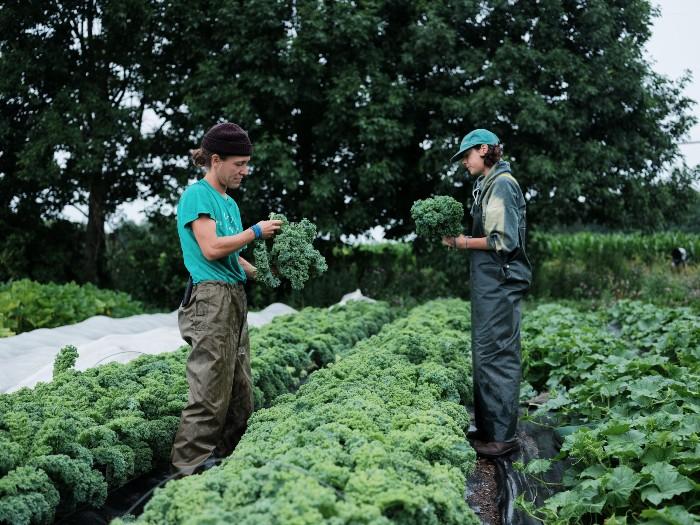 Planter densément permet aux cultures de former une canopée. / Crédit : Alex Chabot