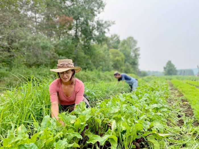 La fertilité du sol, c'est la base de l'agriculture biologique. / Crédit: Tania Jiménez