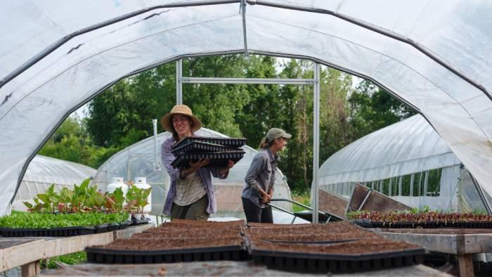 Il est fortement recommandé de commencer par travailler dans d'autres fermes. / Crédit: Olivier Bourget